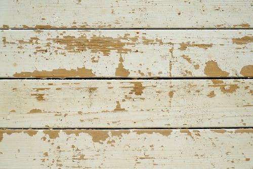 Ảnh lưu trữ miễn phí về bề mặt, cây phong, chặt đốn thành từng khúc, chi tiết
