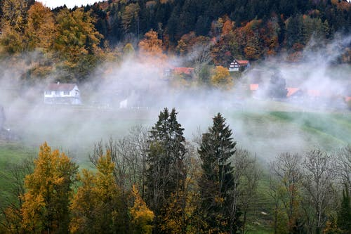 Kostenloses Stock Foto zu big trees, family house, foggy, natural