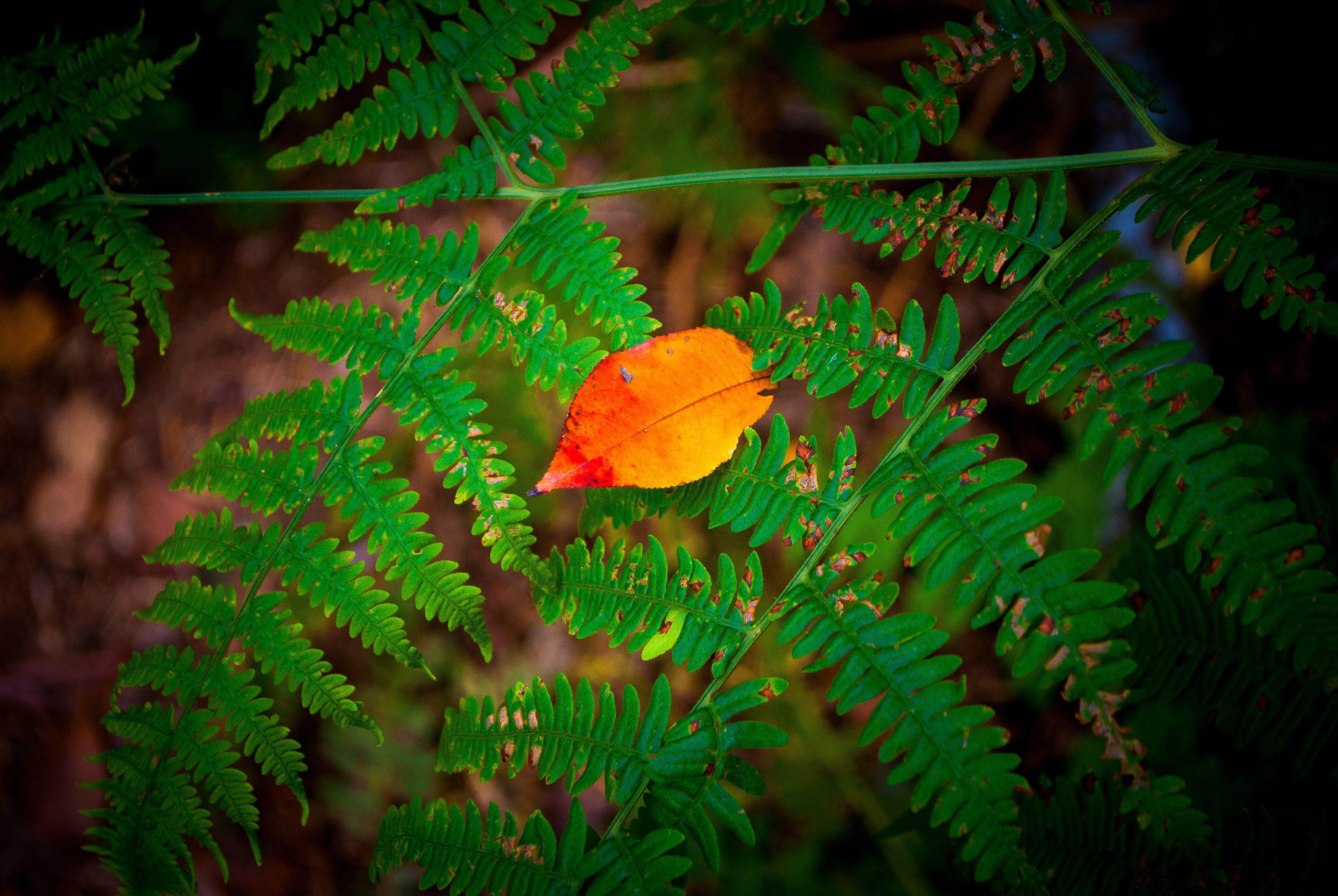 Free stock photo of autumn, autumn leaves