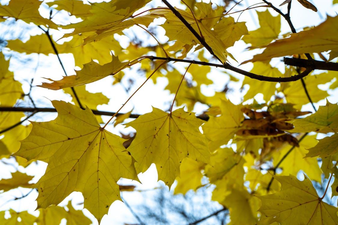 floresta no outono, floresta outonal, folhas