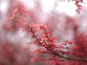 garden, park, blur