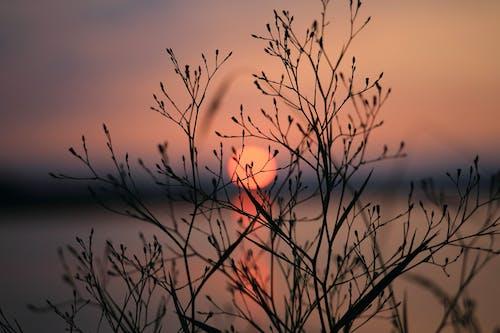 Foto profissional grátis de alvorecer, nascer do sol, pôr do sol, sol