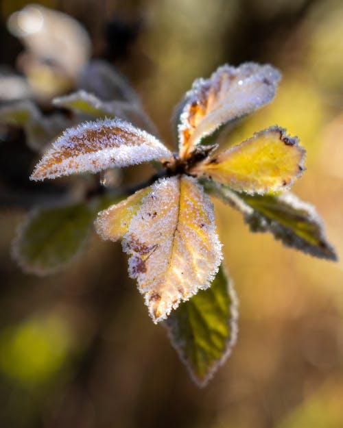 Kostenloses Stock Foto zu eisig, frost, gelb, kalt