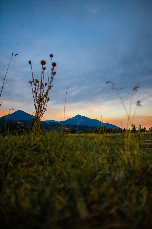 Kostenloses Stock Foto zu abend, bäume, berge, blumen