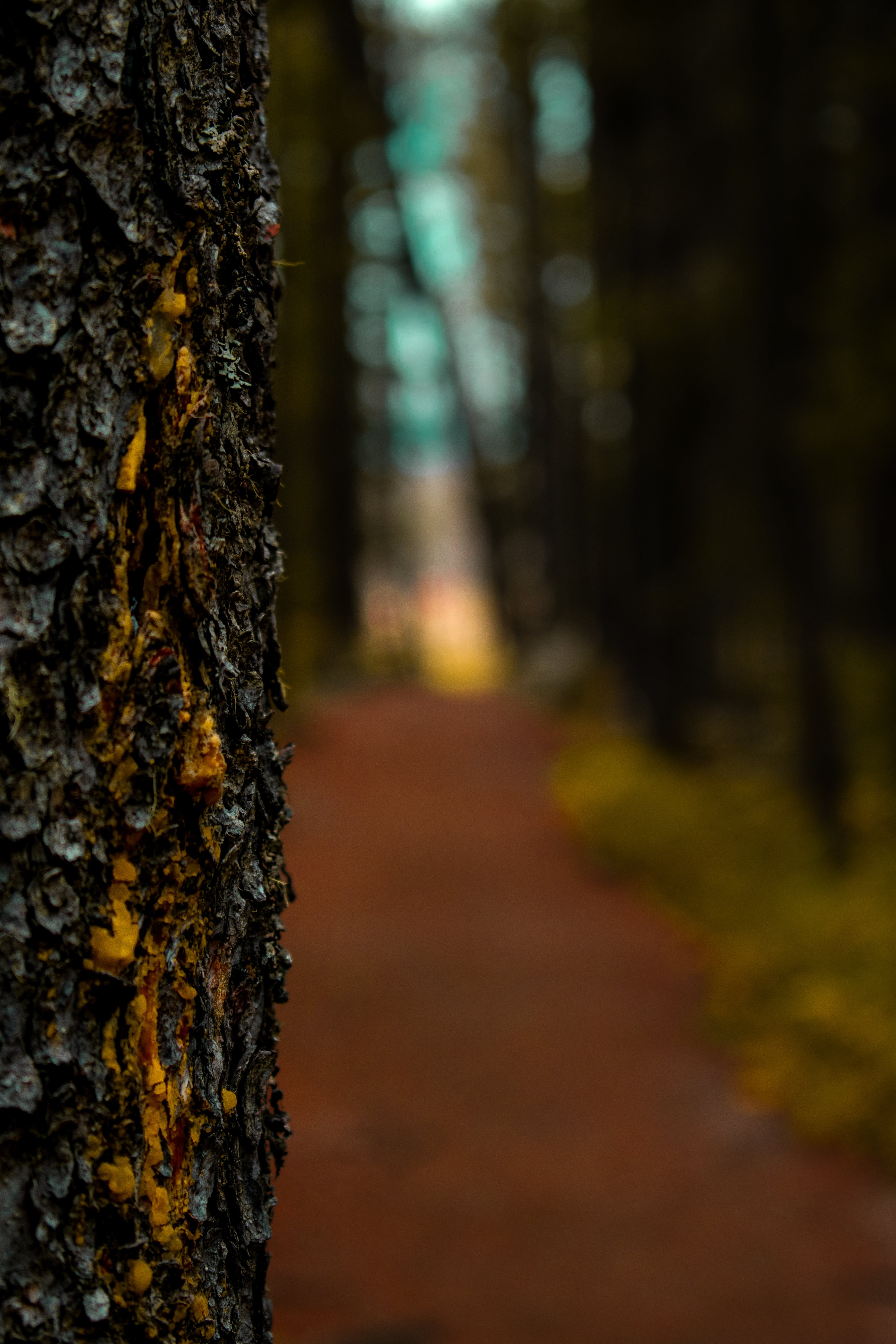 Free stock photo of bark, dirt, forest, hiking