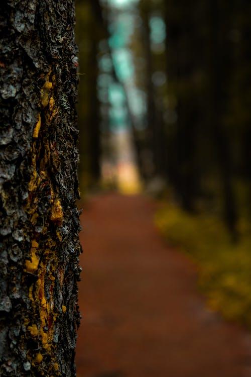 Kostenloses Stock Foto zu bäume, borke, saft, schmutz