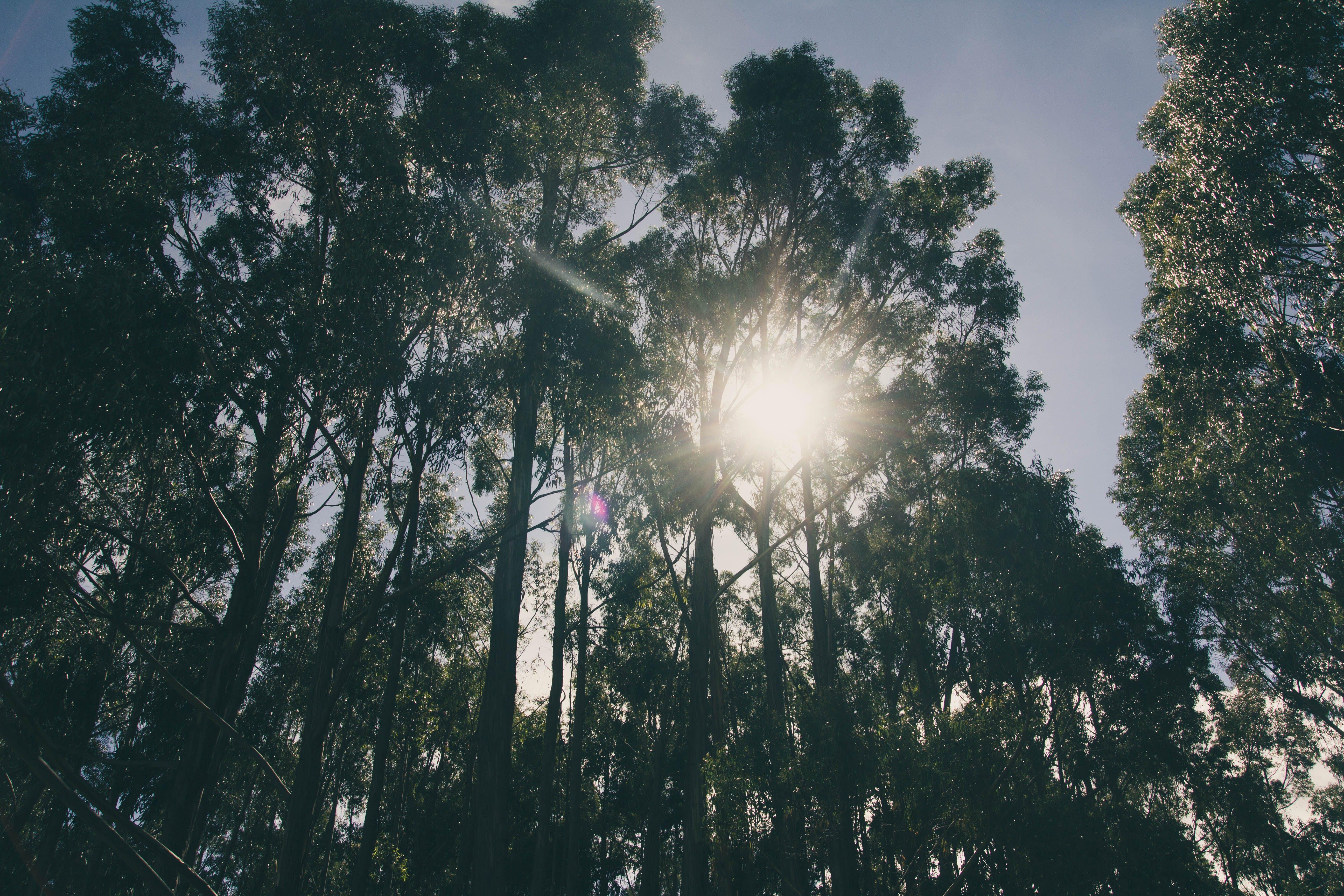 Kostenloses Stock Foto zu licht, landschaft, natur, bäume