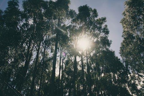 Бесплатное стоковое фото с деревья, легкий, окружающая среда, пейзаж