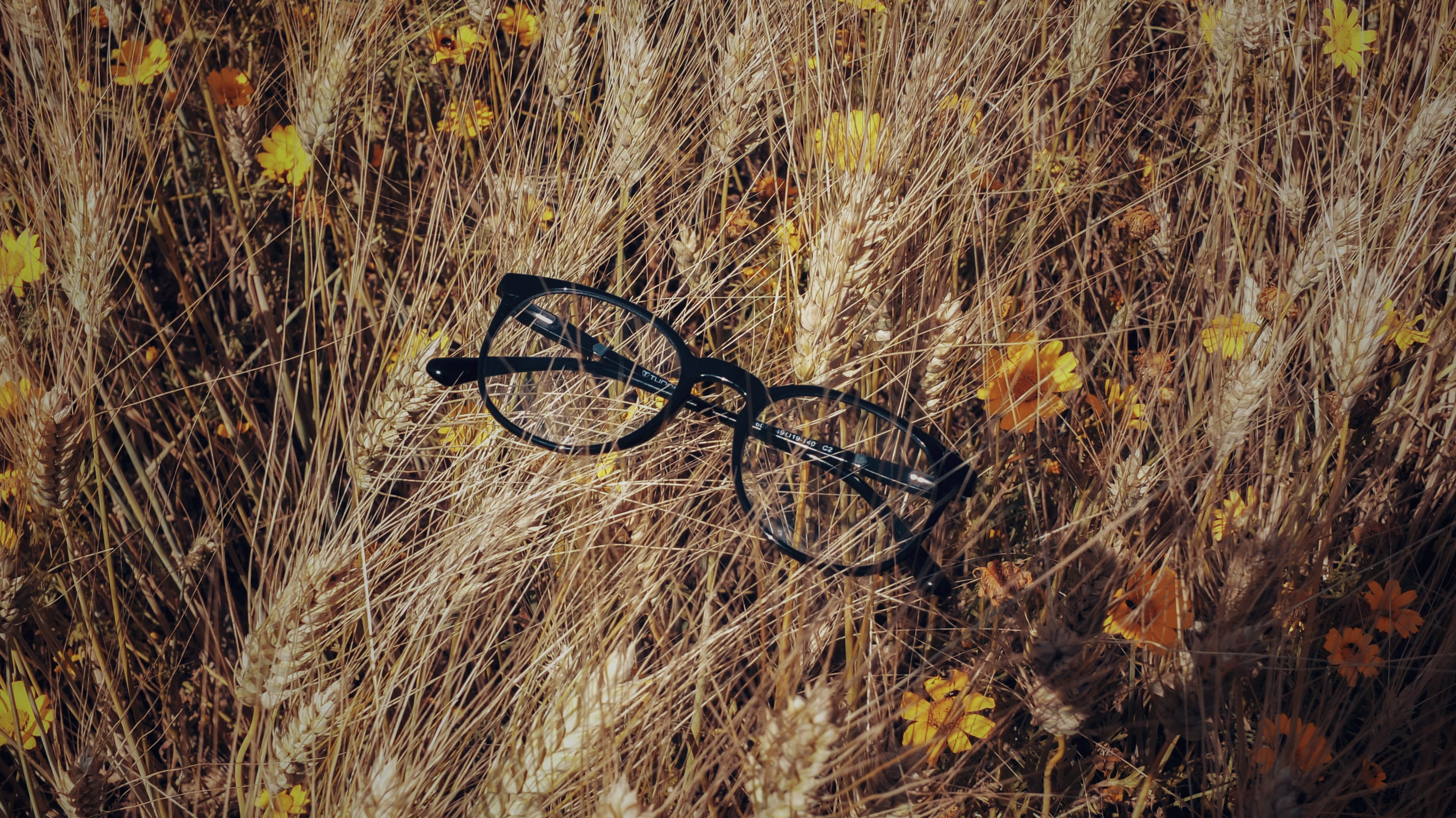 Free stock photo of flower, glasses, nature, nature photography