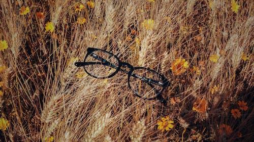 天性, 攝影師, 自然攝影, 花 的 免費圖庫相片