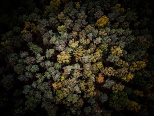 가을 분위기 숲, 계절, 나무, 드론 영상의 무료 스톡 사진