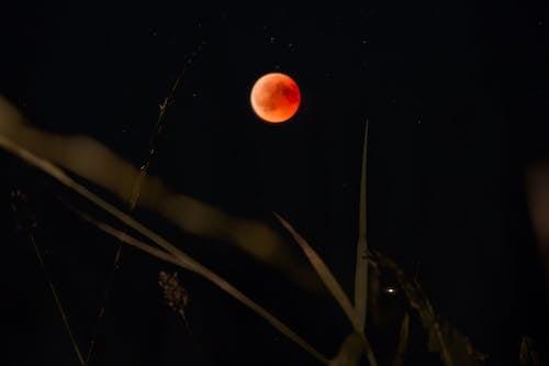 Foto d'estoc gratuïta de fosc, llum de la lluna, lluna, lluna de sang