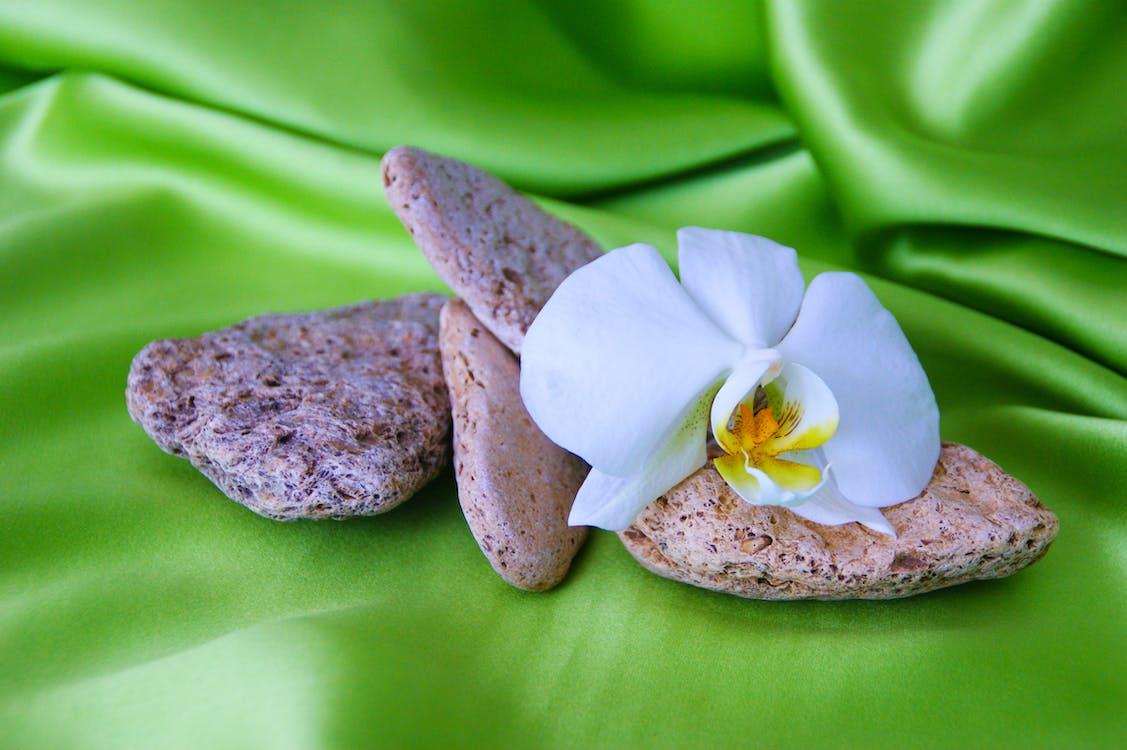 kwiat orchidei z kamieniami