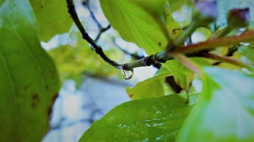 Gratis arkivbilde med grønne blader, refleksjon, selektiv fokus, tre