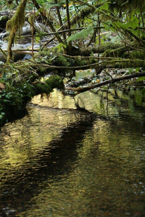 Ilmainen kuvapankkikuva tunnisteilla heijastus, hirsi, kivet, luonto