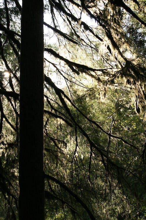 Ilmainen kuvapankkikuva tunnisteilla aurinko, kevyt, luonto, metsä