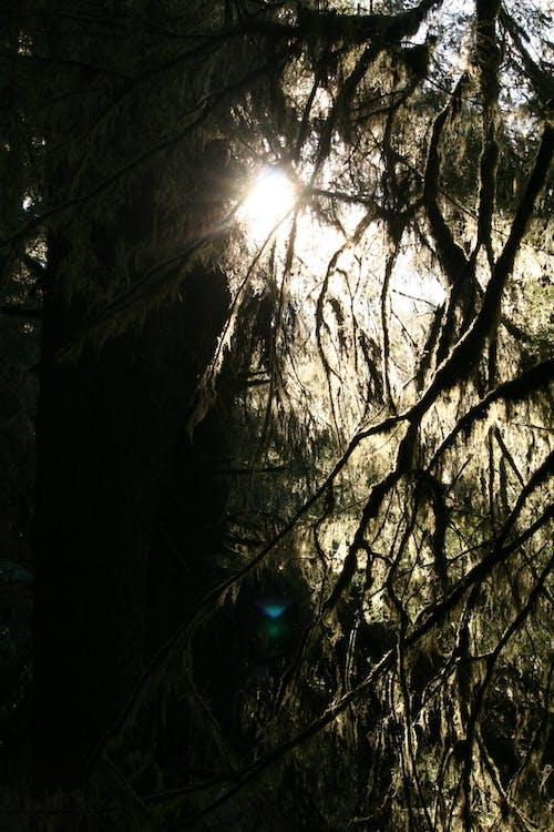 Ilmainen kuvapankkikuva tunnisteilla auringonsäde, kevyt, luonto, metsä