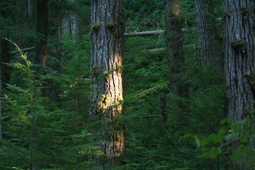 Ilmainen kuvapankkikuva tunnisteilla haukkuminen, kevyt, luonto, metsä