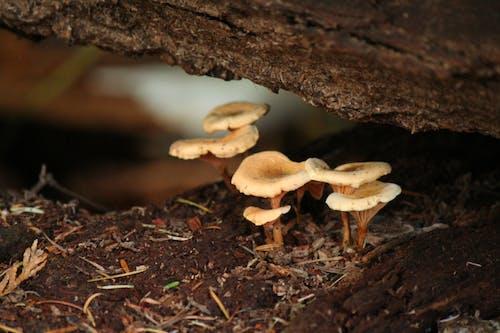 Ilmainen kuvapankkikuva tunnisteilla hirsi, lika, luonto, metsä