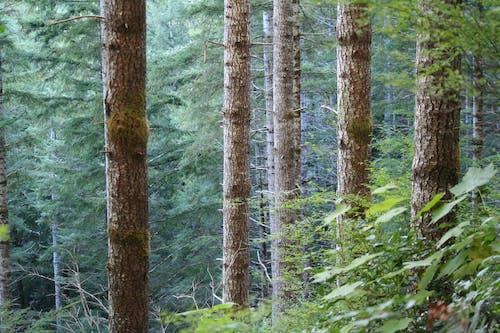 Ilmainen kuvapankkikuva tunnisteilla haukkuminen, luonto, metsä, oksat