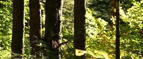 Ilmainen kuvapankkikuva tunnisteilla kevyt, luonto, metsä, oksat