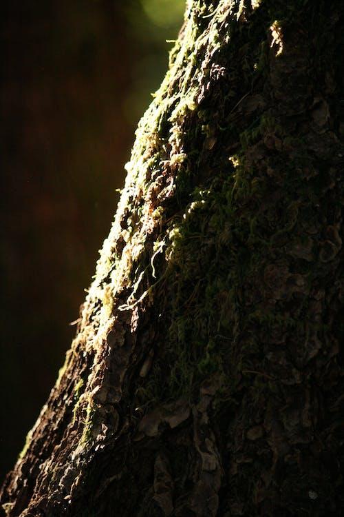 Ilmainen kuvapankkikuva tunnisteilla aurinko, haukkuminen, kevyt, lähikuva