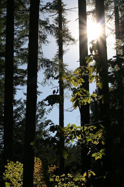 Ilmainen kuvapankkikuva tunnisteilla auringonsäde, aurinko, kevyt, luonto