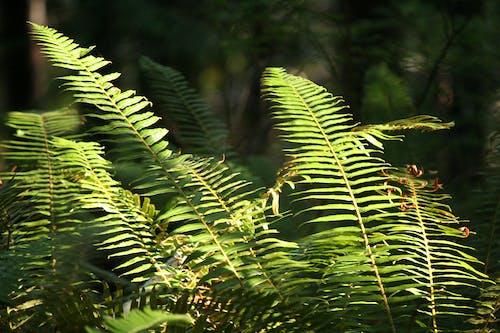 Ilmainen kuvapankkikuva tunnisteilla kasvit, kevyt, luonto, metsä