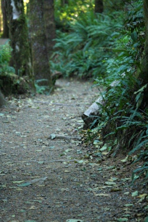 Ilmainen kuvapankkikuva tunnisteilla jauhettu, lika, luonto, metsä