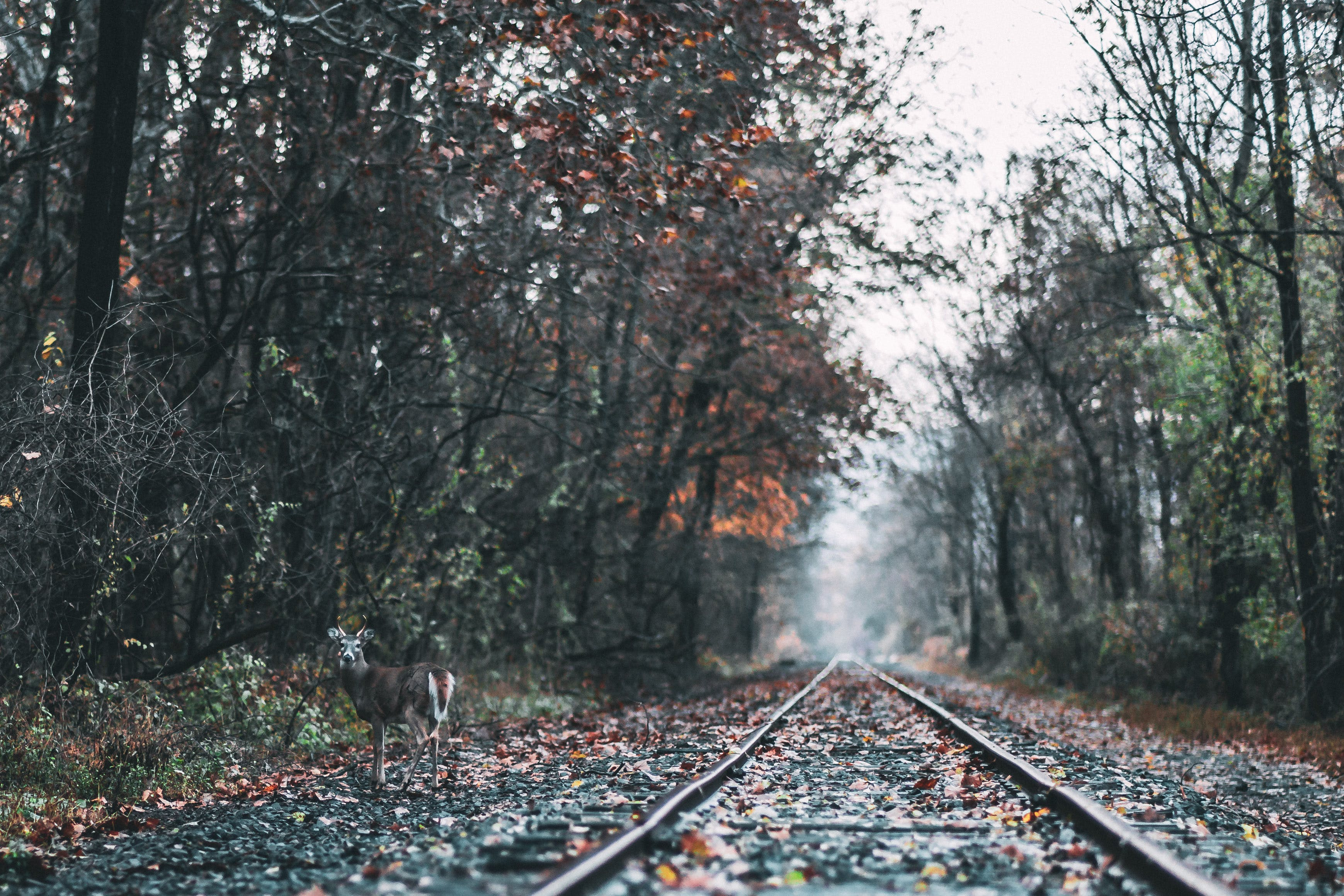 Railways in Foret
