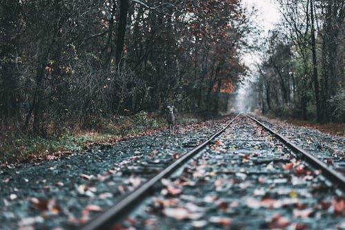 Imagine de stoc gratuită din animal, animale sălbatice, arbori, cale ferată