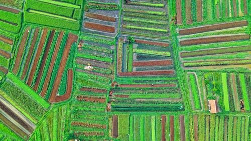 Aerial View Photography of Field