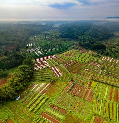 Imagine de stoc gratuită din agricultură, arbori, câmpuri, copaci