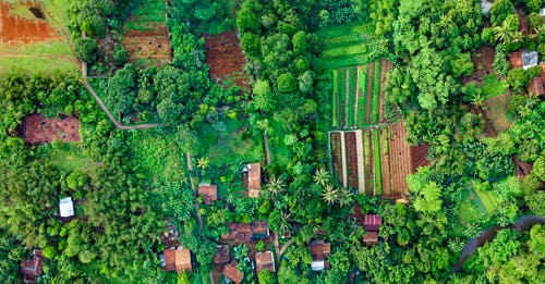 Bird's Eye View Photography of Fields Surrounded With Trees