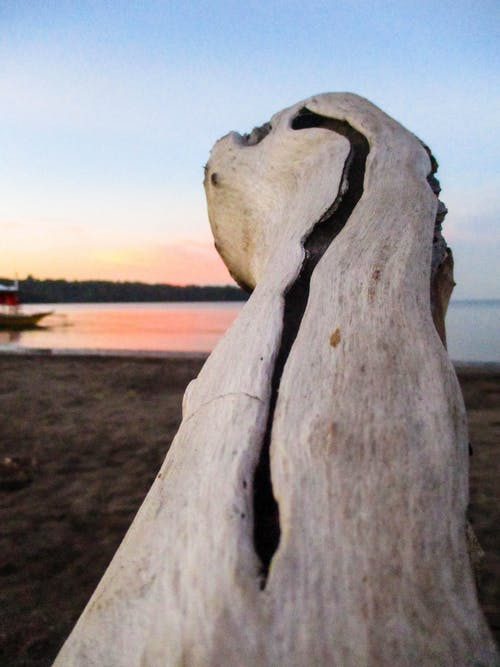 Free stock photo of Bataan, close up, driftwood, early morning