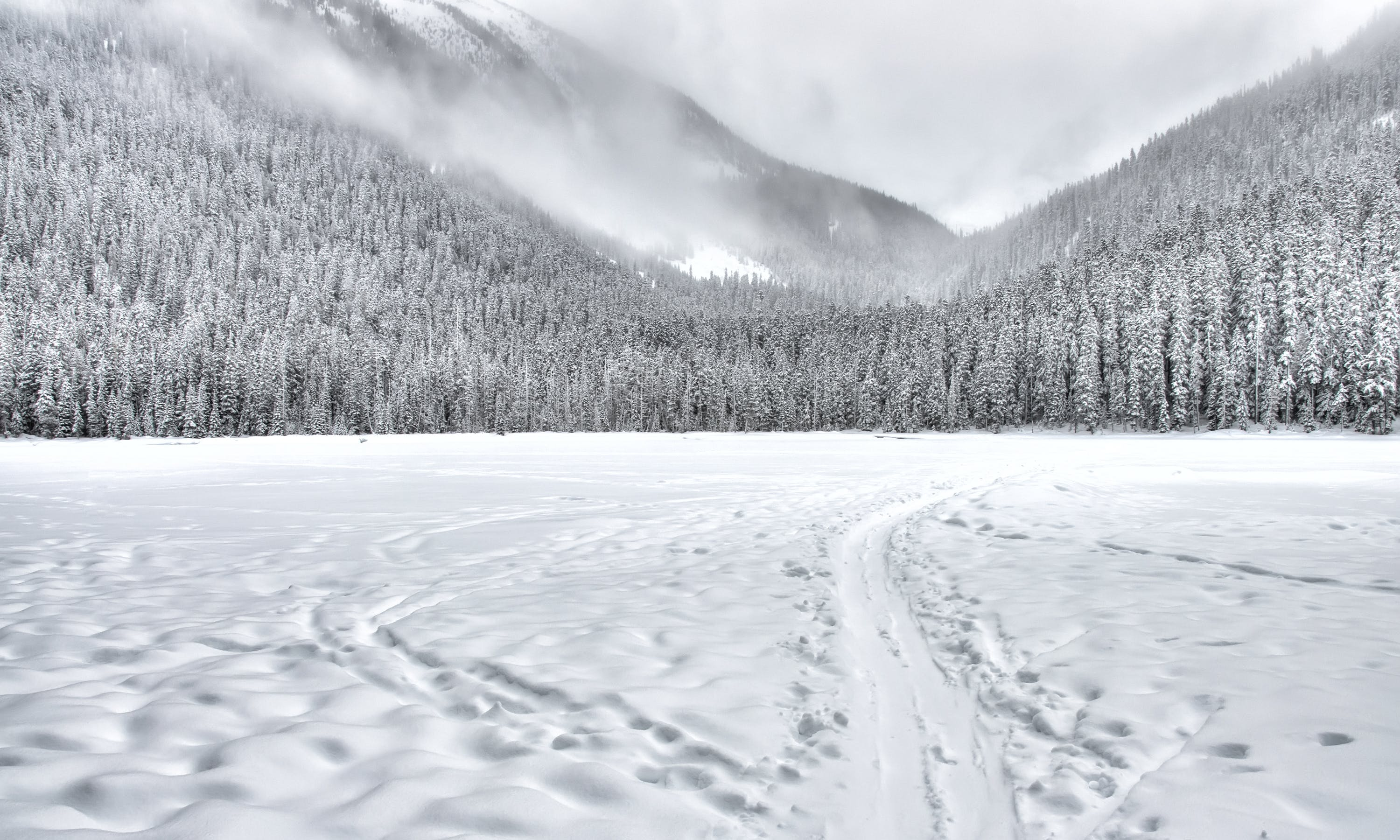 Snow-covered Forest Field