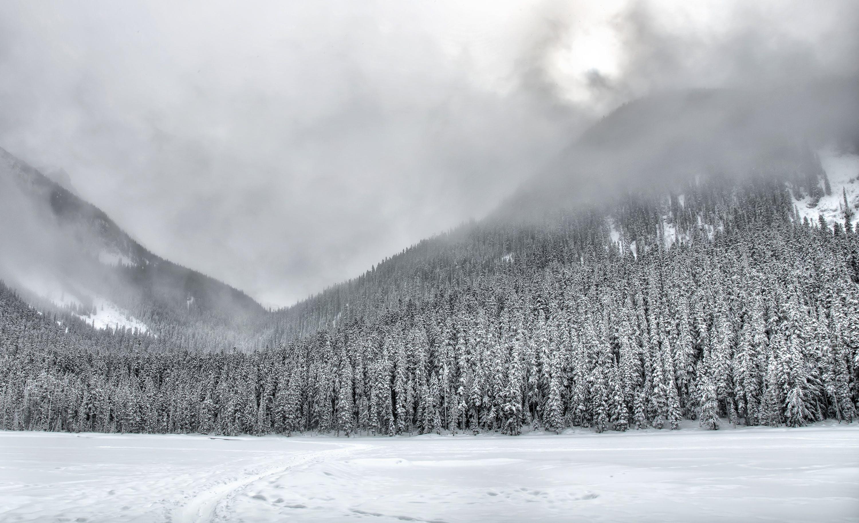 Photos gratuites de arbres, brouillard, brume, chemin