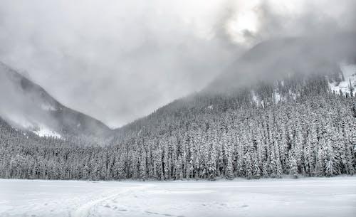 Безкоштовне стокове фото на тему «імла, іній, відтінки сірого, гори»