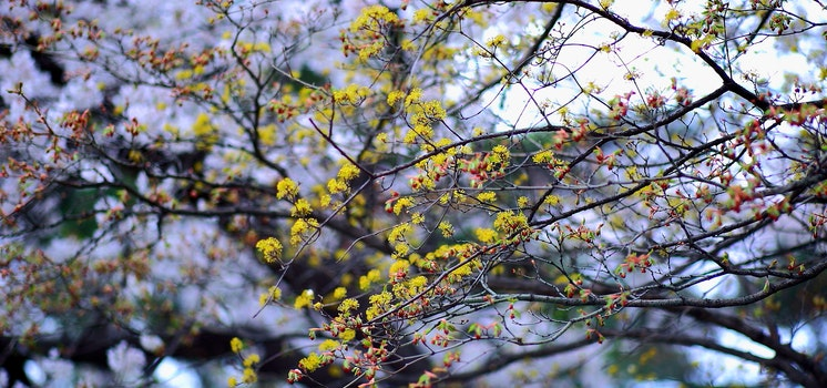 Yellow Petaled Tree Flowers