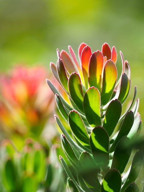 Photos gratuites de arrière-plan flou, botanique, brillant, centrales