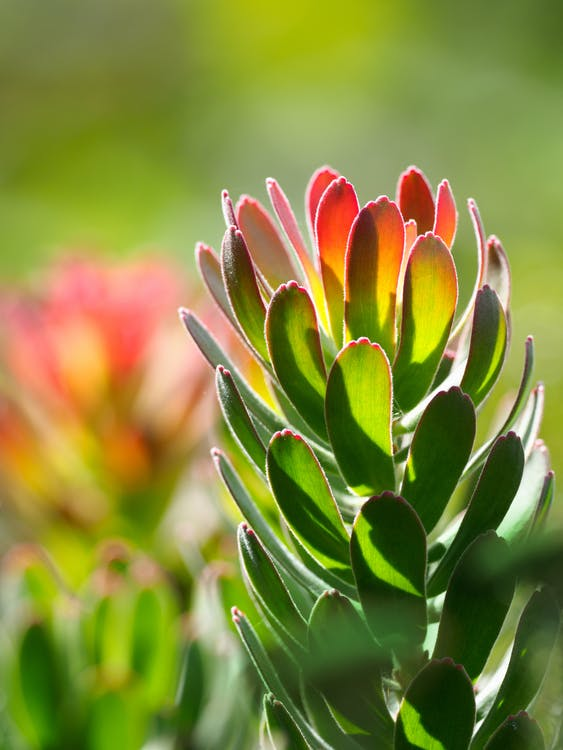 arrière-plan flou, botanique, brillant