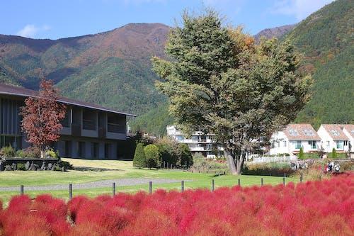 Fotobanka sbezplatnými fotkami na tému farby jesene, japončina, Japonsko