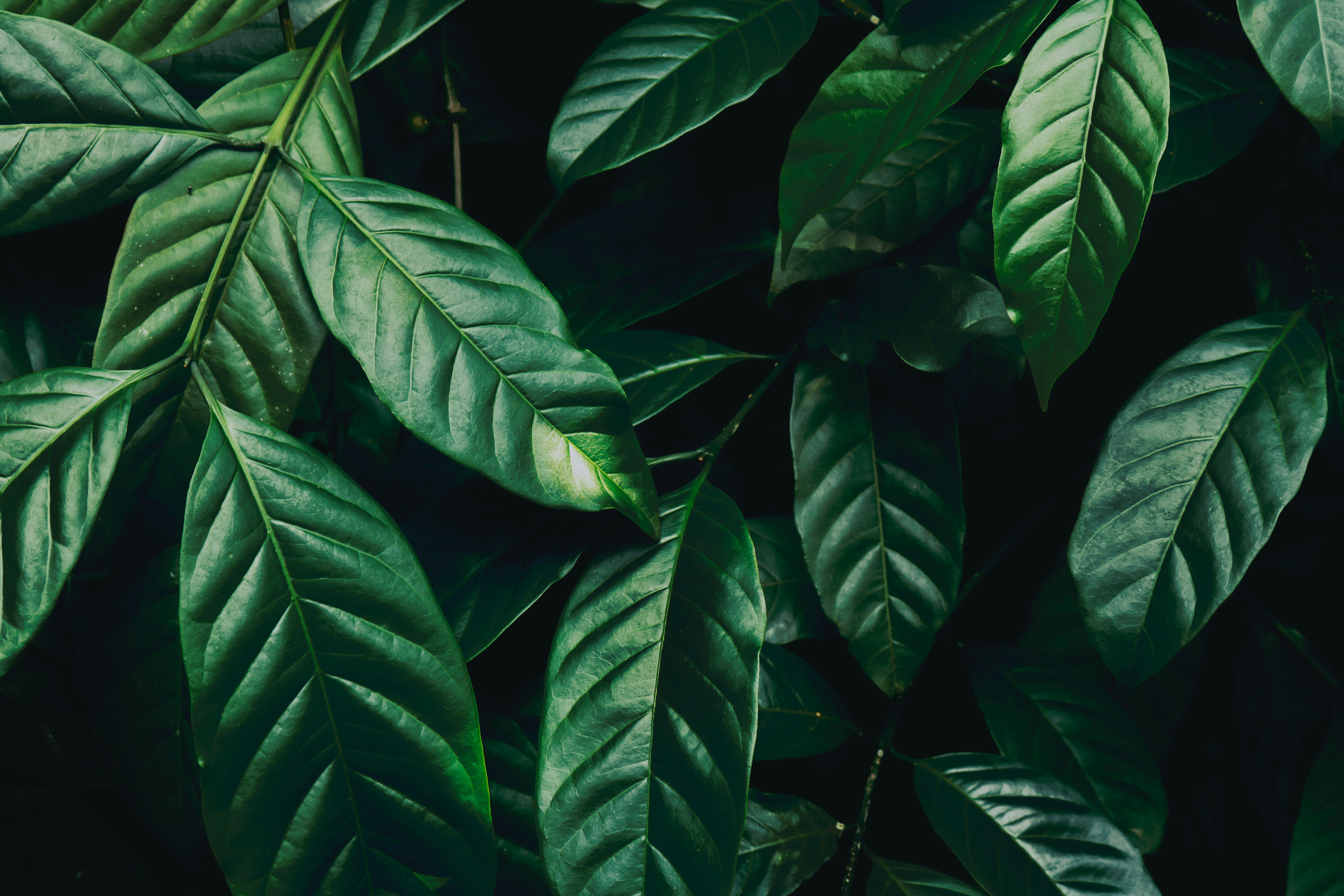 1000 Great Leaves Photos Pexels Free Stock Photos
