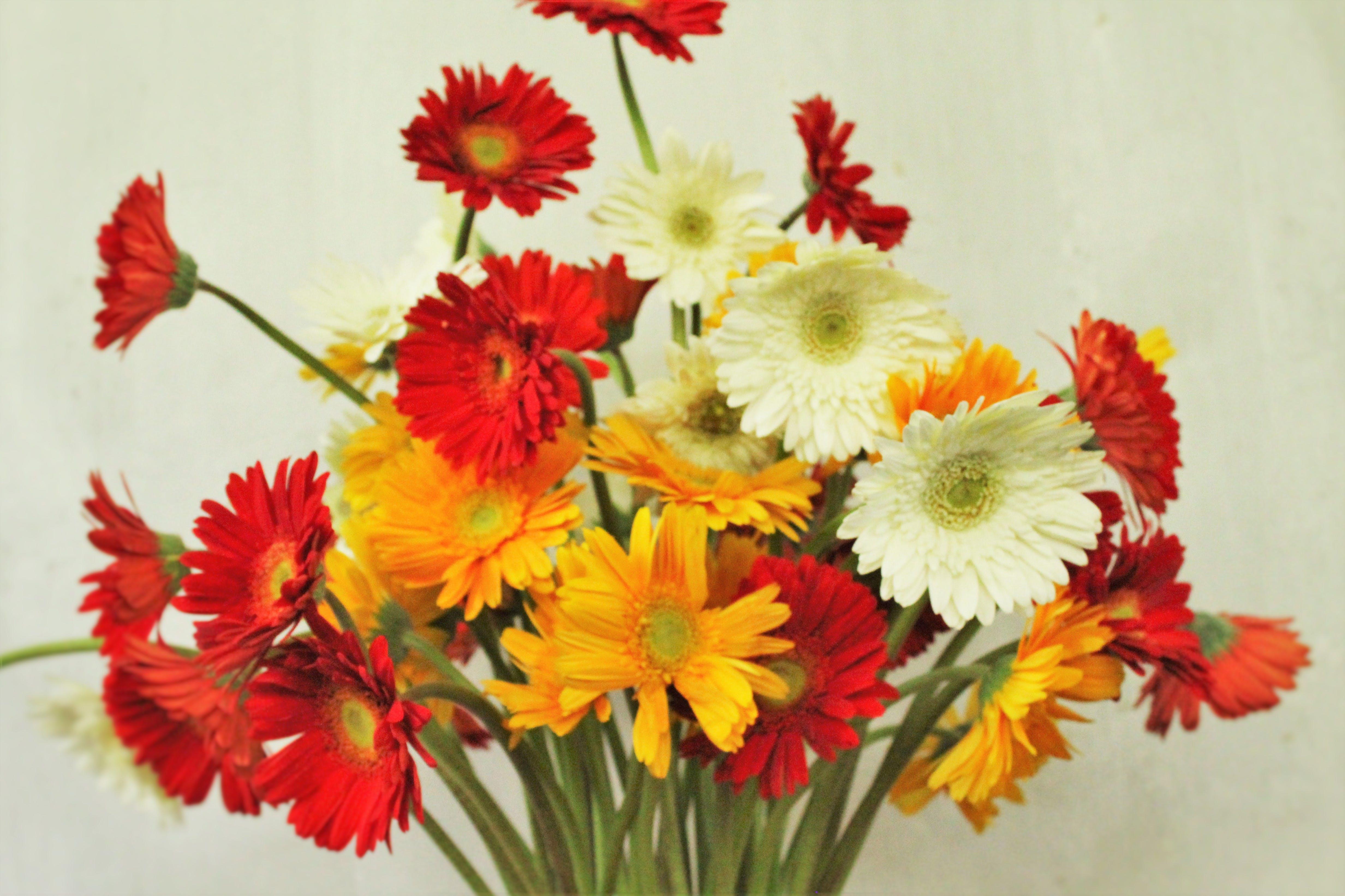 Free stock photo of beautiful flowers, carnation flower, flower arrangement, flowers