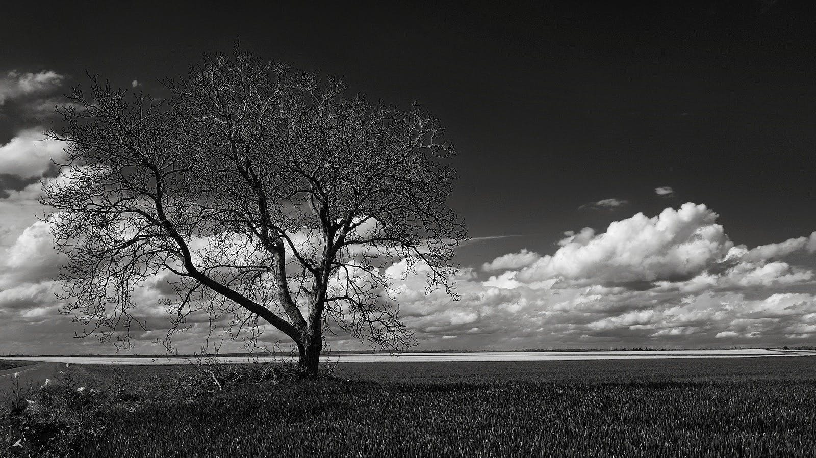 Gray Scale Photo of Leafless Tree Under Cloudy Sky