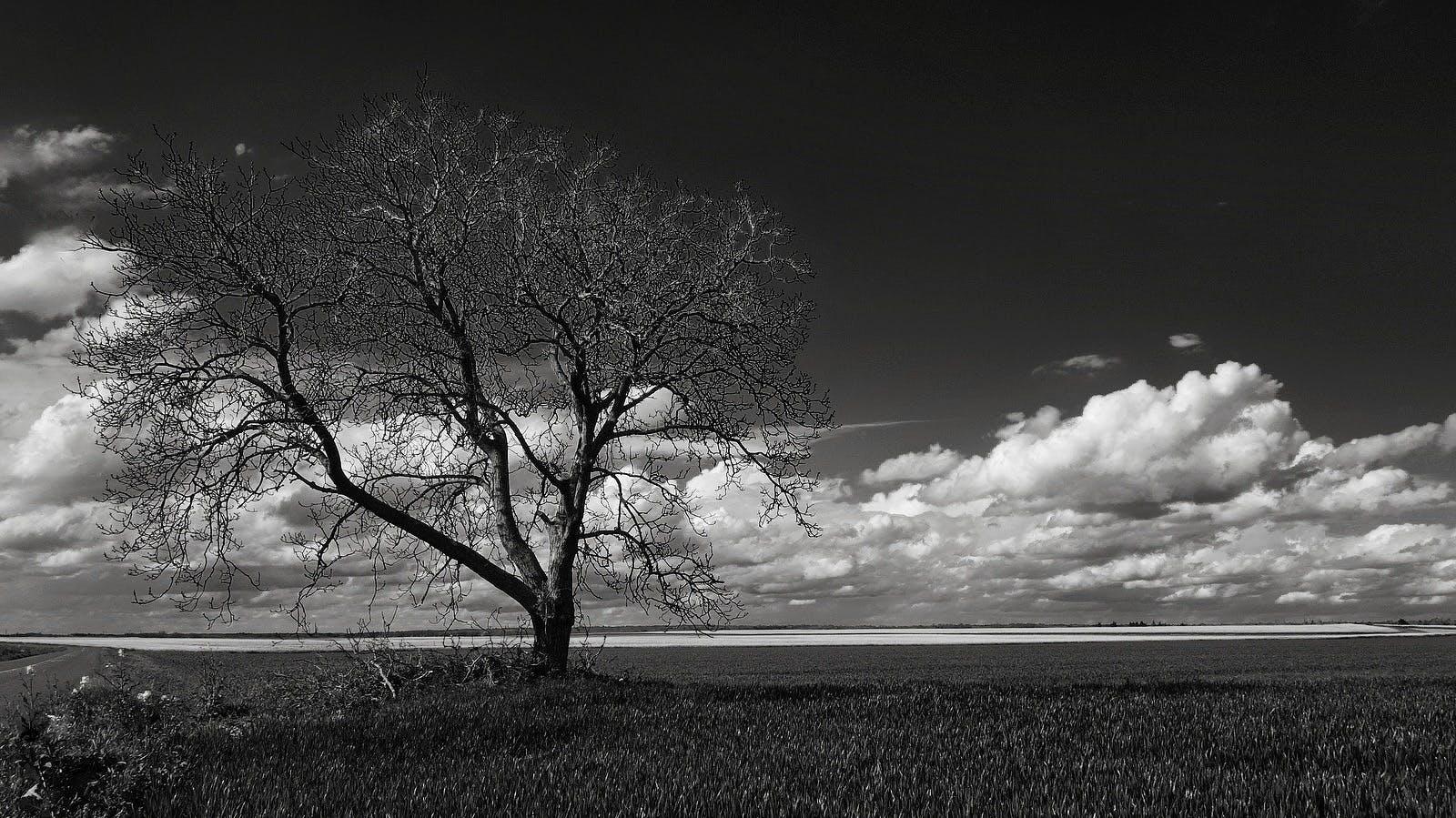 しぼんだ, フィールド, 天気, 嵐の無料の写真素材