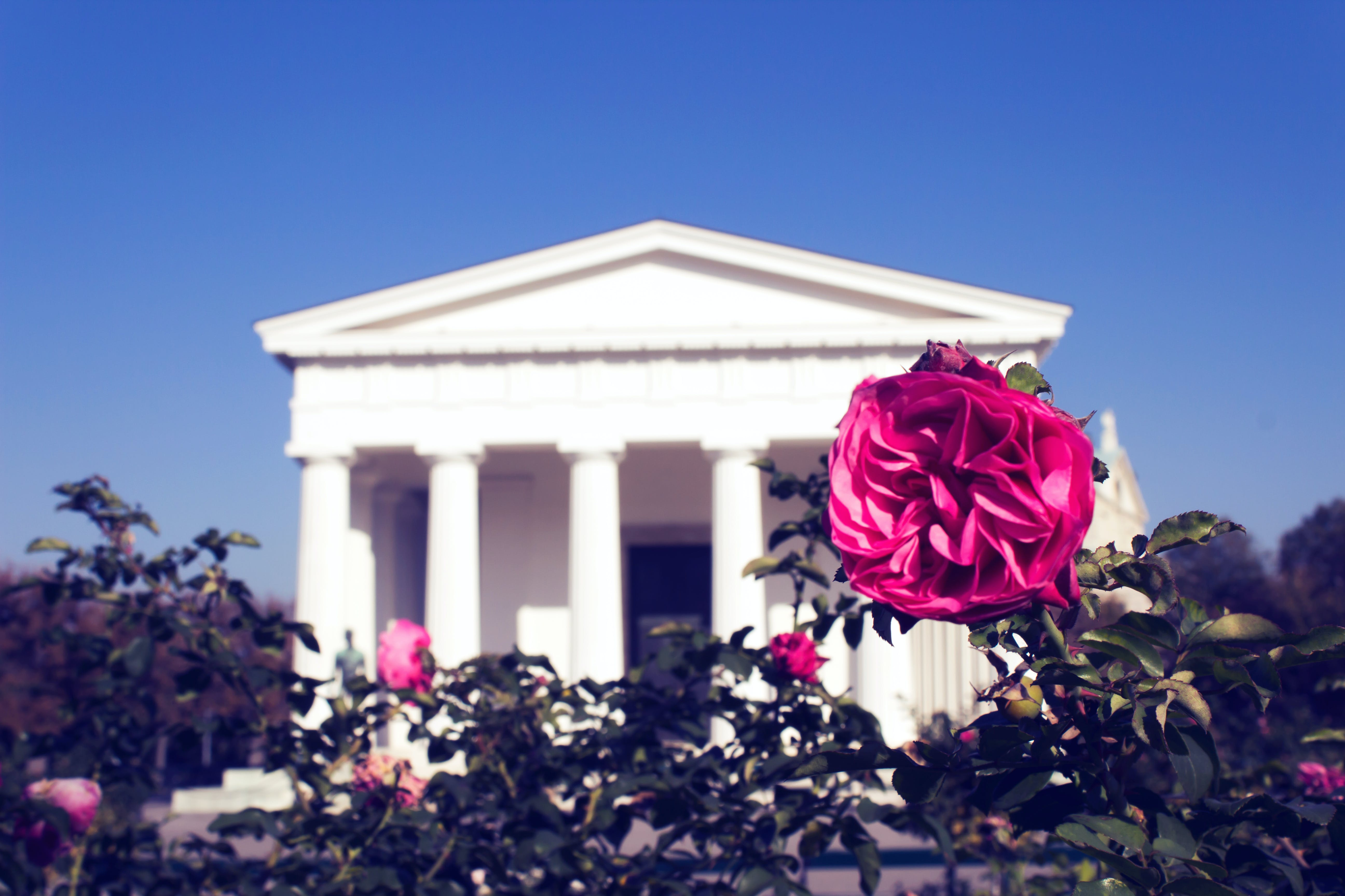 Photo of Red Rose with White Concrete Building in the Background