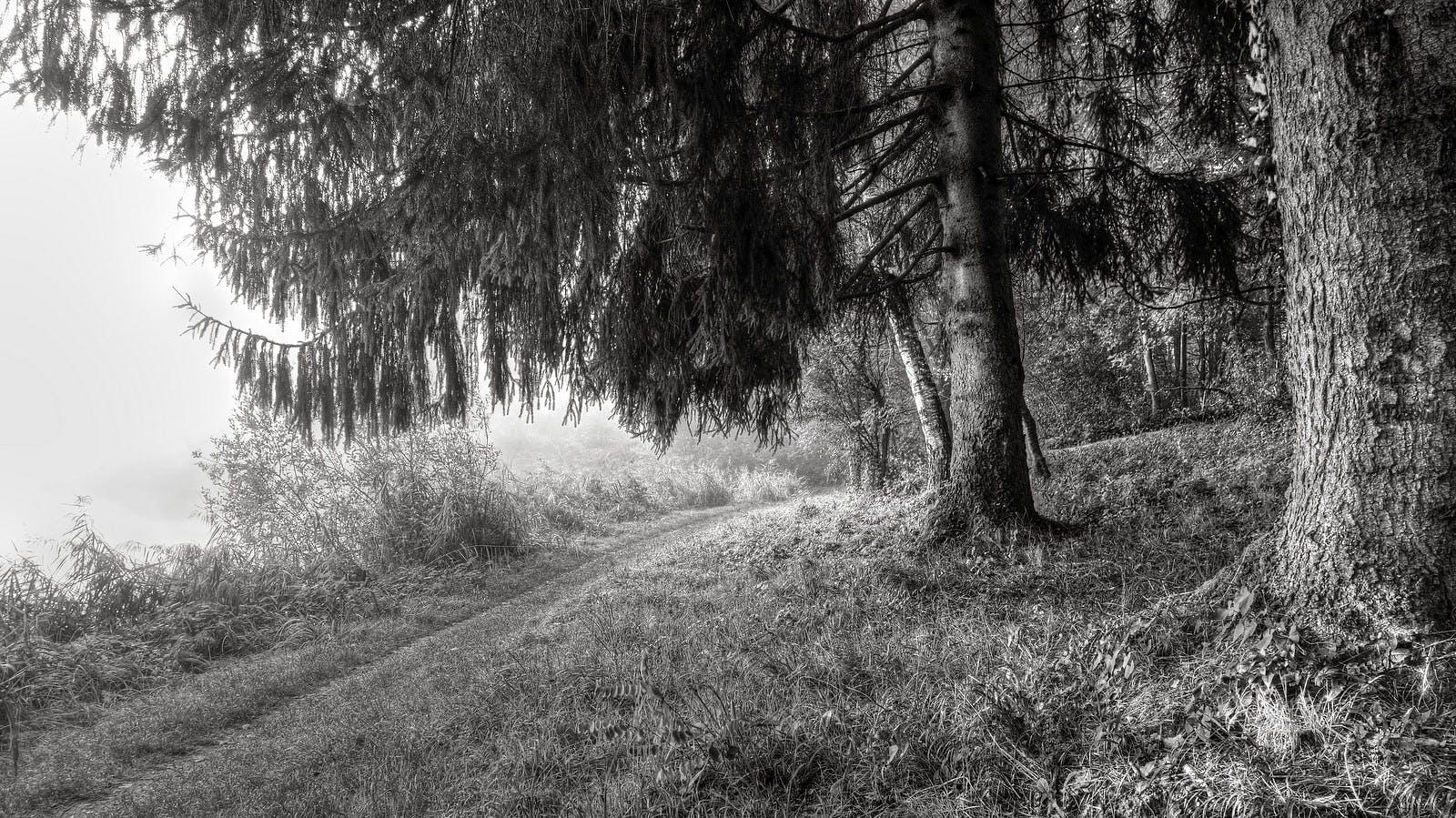 白黒, 絶景, 自然, 草の無料の写真素材