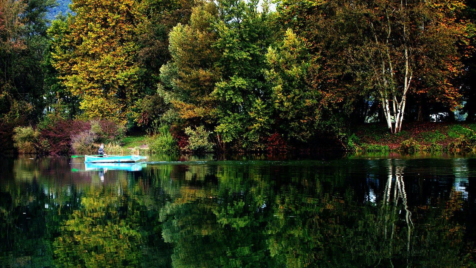 Kostenloses Stock Foto zu bäume, draußen, fluss, landschaft
