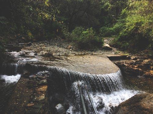 Foto profissional grátis de água, árvores, cachoeiras, cênico
